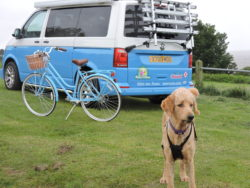 Blue campervan with dog